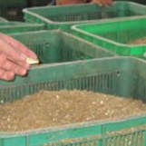 Raw materials of manure